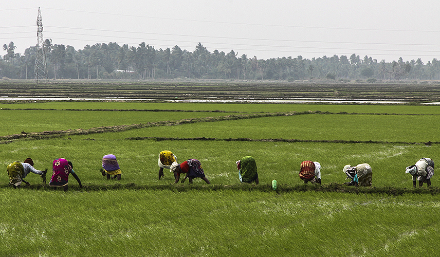 Weeding the Fields 1-Kumbakkonam