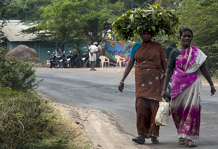 Kumbakkonam :: Ladies in Pink and Brown