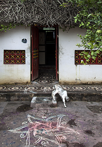 Tangore :: Goat with Red Windows