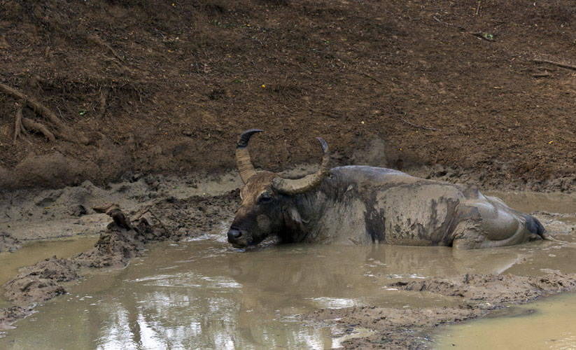 Water Buffalo Spa